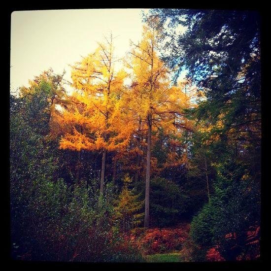 Autumn Autumcolours Trees Treesplease 2013 walking walkingdogs walkies walkingwiltshire walkedmiles
