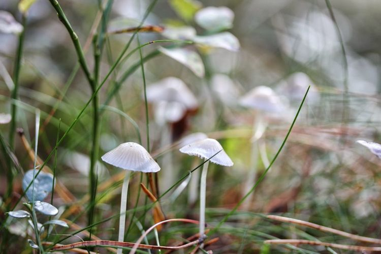 Autumn Beauty In Nature Beginnings Botany Close-up Day Focus On Foreground Fragility Growing Growth Mushrooms Nature New Life No People Outdoors Petal Selective Focus