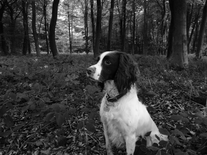 Dog looking away while sitting on field in forest