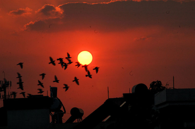 Silhouette people flying against orange sky during sunset