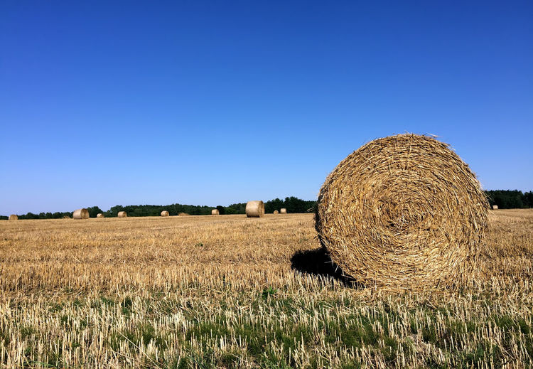 Agriculture Crop  Day Farm Field Grass Grassy Harvesting Landscape Outdoors