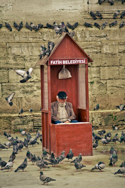 Adult Architecture Day Istanbul Old Man One Man Only Only Men Outdoors People Pigeon Sitting Turkey