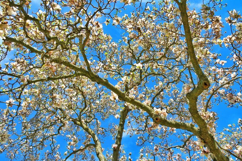 Springtime Spring Spring Has Arrived Primavera Blooms Blooming Tree Nature Photography Nature_collection Naturephotography TreePorn Walkinthepark Springblossoms Spring Flowers Flowers Flowerporn EyeEm Nature Lover Nature On Your Doorstep Nature_collection Landscape_collection EyeEmNatureLover Eyeemphotography Botanical Botanique Botanic Gardens Springisintheair Springflowers