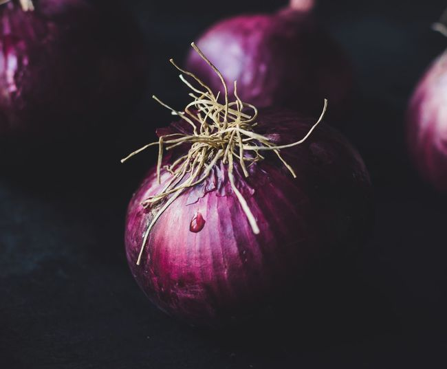 Close-up of purple