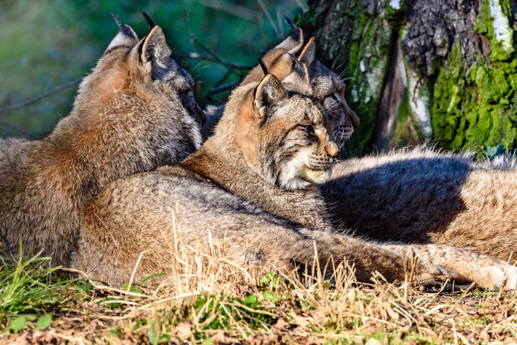 Tiere/Animals Wildlife & Nature Wildlife Photography Wildpark Alte Fasanerie No People