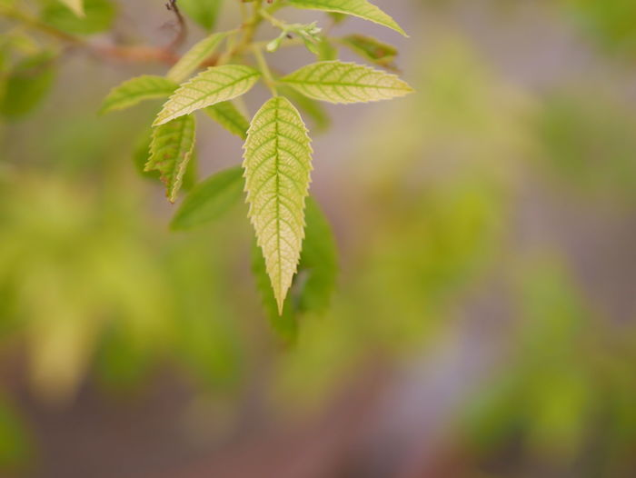 Nature view Leaf Plant Part Growth Plant Green Color Close-up Beauty In Nature Selective Focus No People Focus On Foreground Day Nature Freshness Outdoors Tranquility Vulnerability  Fragility Leaves Herb Beginnings