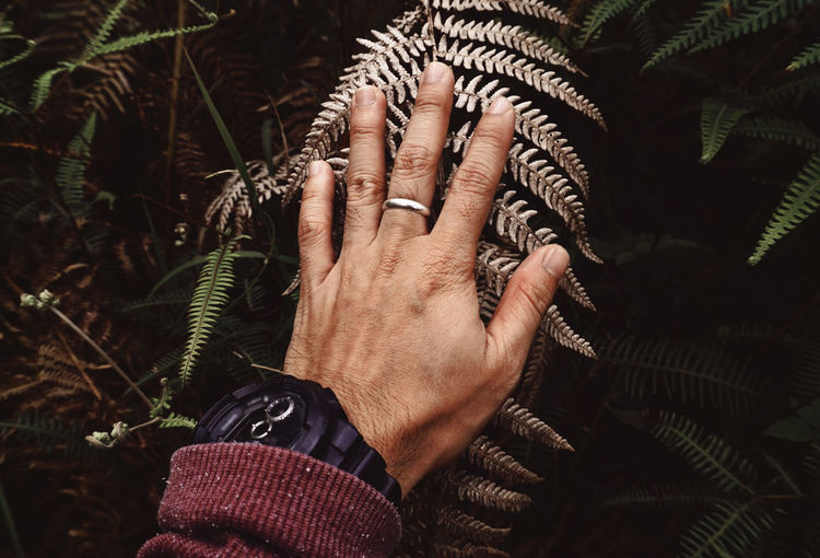 Close-up of human hand touching plant