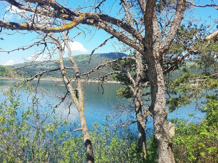 Abant Turkey Abant Lake Bolu..TURKEY Bolu  Beauty In Nature Lake Blue Tree Bolu TURKEY Tree Water Full Frame Backgrounds Branch Sky Close-up Green Color Stem In Bloom Leaves Pollen Petal Blooming Botany