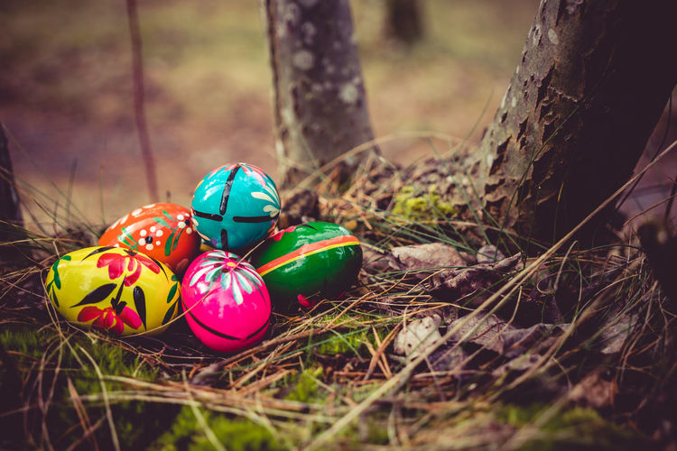 Close-Up Of Easter Eggs In Forest