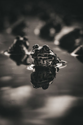 Close-up of wilted rose in water
