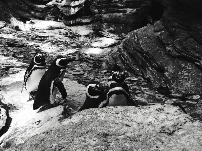 Rock - Object Rock Formation Nature Water Outdoors Day Penguin Togetherness Real People Adventure Sitting Men Mammal People