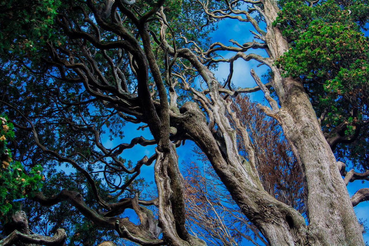 tree, tree trunk, nature, branch, outdoors, day, no people, tranquility, beauty in nature, blue, growth, low angle view, scenics, forest, dead tree