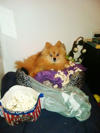 my little gizmo and his popcorn That's Me