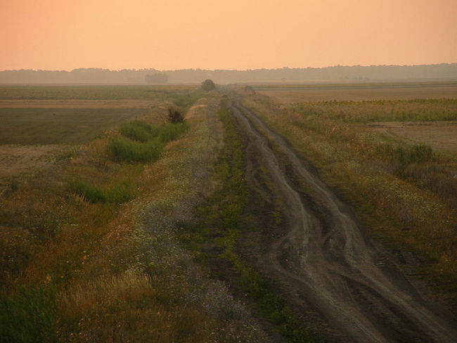 Sunrise Over The Road Agriculture Beauty In Nature Cultivated Land Diminishing Perspective Field Horizon Over Land Landscape Nature No People Non-urban Scene Road Rural Scene Sky Sunrise