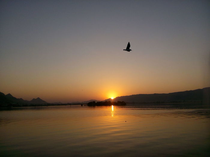 Silhouette bird flying over lake against clear sky during sunset