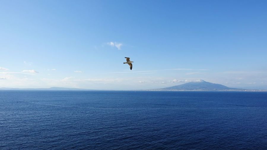 Seagull flying over sea against blue sky