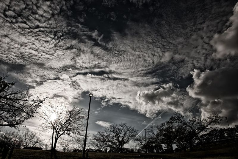 Tree Cloud - Sky Nature Dramatic Sky Sky Beauty In Nature Landscape Blach And White