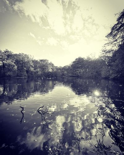 Sherdley Park UK Sherdley Park Water Lake Reflection Silhouette Floating On Water Sky Cloud - Sky