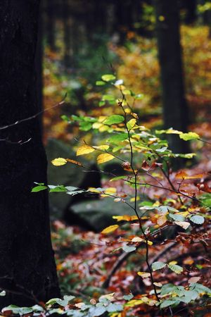 Autumn,Germany Autumn Autumn Colors Autumn Leaves Herbst Herbstzeit Nature October Plant Autumn🍁🍁🍁 Herbstblatt Herbstfarben Malerisch Nature_collection Oktober Park Wald