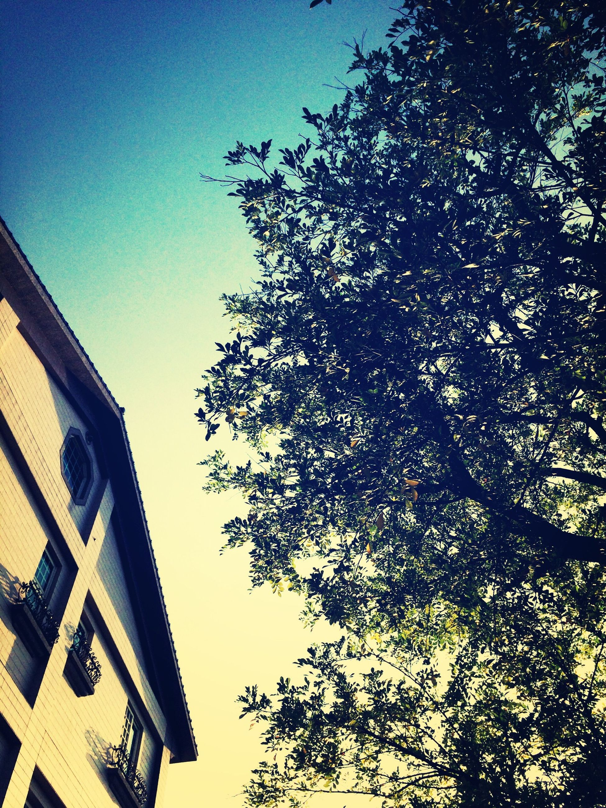 low angle view, building exterior, architecture, built structure, tree, clear sky, branch, sky, building, residential building, high section, residential structure, house, blue, growth, window, outdoors, city, no people, day