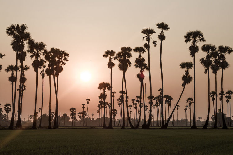 palm trees on beautiful sunset background Plant Tree Sky Sunset Grass Nature Growth Tranquility Beauty In Nature Field Tranquil Scene Scenics - Nature Land Palm Tree Tropical Climate Sun No People Silhouette Outdoors Orange Color