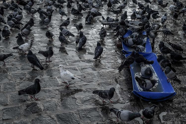 High angle view of birds in water