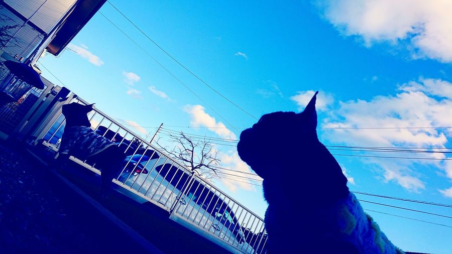Happy New Year Frenchbulldoglife Frenchbulldog フレンチブルドッグ フレブル Buhigram Buhi #frenchbulldoglove #frenchbulldog Happy New Year Human Hand Silhouette Blue Sky Close-up
