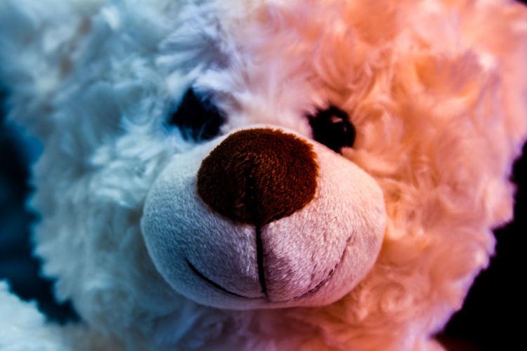 good vs evil for mr teddy Bear Teddy Fluffy Warm Cold Nose Eyes Texture