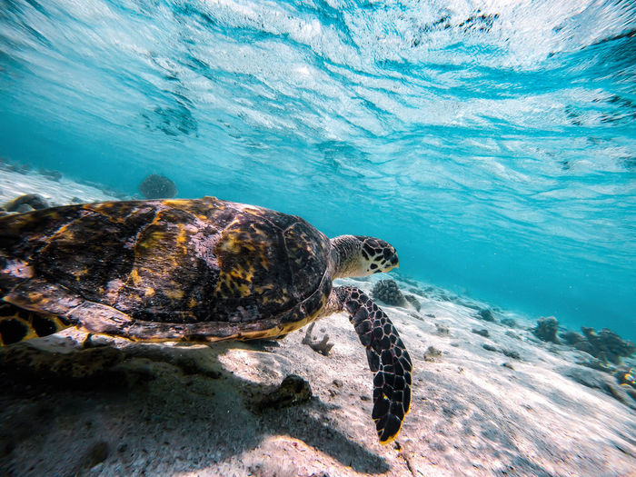 View of a turtle in sea