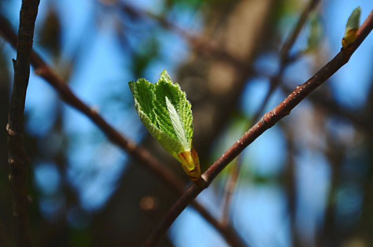 New life 🌱 KristinaHopfi Photography Nature Close-up Growth Leaf Plant Spring Sprout New Life Hazelnut Detail Outdoors Visual Creativity No People Beginnings Selective Focus Branch Vulnerability  Twig