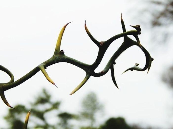 Sharp ends Memphis Nature Tennessee Botanical Gardens