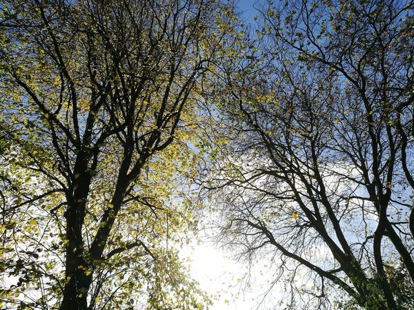 Low Angle View Tree Trees Branch No People Beauty In Nature Growth Nature Full Frame Facing The Sun Outdoors Branches And Sky Branches Branches Of Trees Autumn