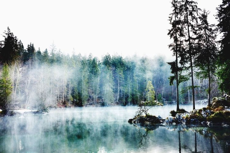 Trees and calm lake against clear sky during foggy weather