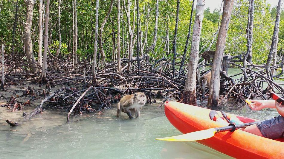 The Traveler - 2015 EyeEm Awards Capture The MomentHoliday POV Monkeys Mangrove Forest Mangrove Life Feeding Time for the monkeys, Koh Lanta Canoing Capturing Freedom