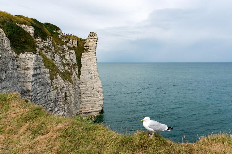 Seagulls on the sea shore