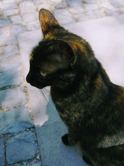 Cat Street Cat