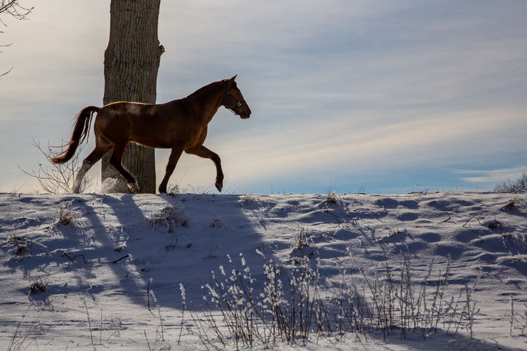 Horse dog on snow covered land