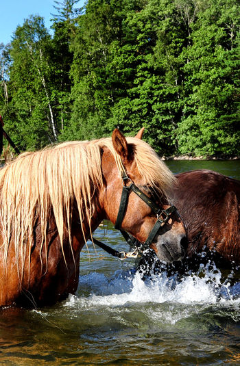 Bathing horses Animal Themes Bathing Horses Day Horses Nature No People Outdoors Water Waterfront