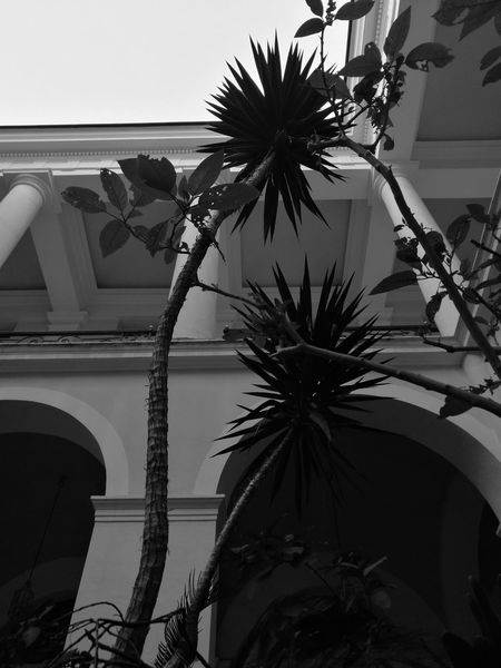 Palm Tree No People Ombres Et Lumières Light And Shadow Black And White Collection  Blackwhite Noir & Blanc  Noirphotography Noirblanc Architecturelovers Architecturephotography Architecture And Art Architecture Details Welcome To Black