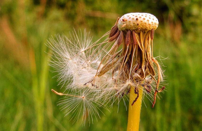 Seeds. Enjoying Nature Denmark Tadaa Community EyeEm