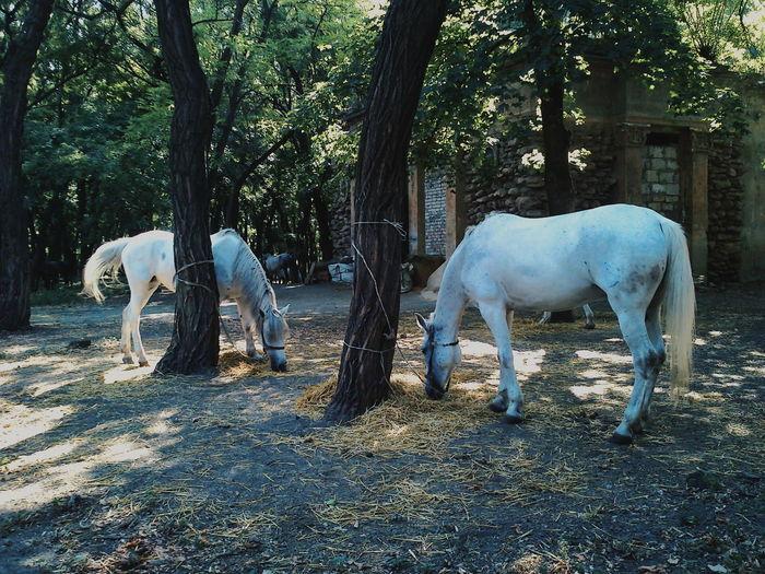 Home Is Where The Art Is Hidden Gems  Odessa The Duke Garden Дюковский Horses White Horses Nature
