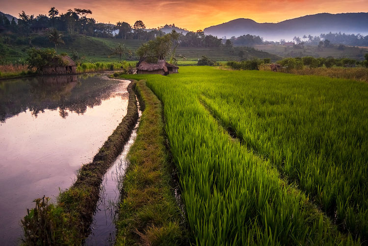 Dawn in the Rice Fields of Bali. The village of Dawn in the Rice Fields of Bali. Sidemen has some of the most dramatic and beautiful rice terraces in all of Indonesia. Tourism is starting to invade the area and I fear Sidemen could be changing and not necessarily in a good way. Scenics - Nature Plant Landscape Tranquil Scene Beauty In Nature Rural Scene Land Rice Paddy Field Agriculture Rice - Cereal Plant Farm Nature Growth Green Color Sky No People Outdoors Plantation Bali Sidemen Terrace Rice ASIA Travel