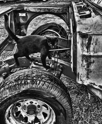 Tire Transportation Day Wheel No People Outdoors Land Vehicle Animal Themes Close-up Mammal The Great Outdoors - 2017 EyeEm Awards