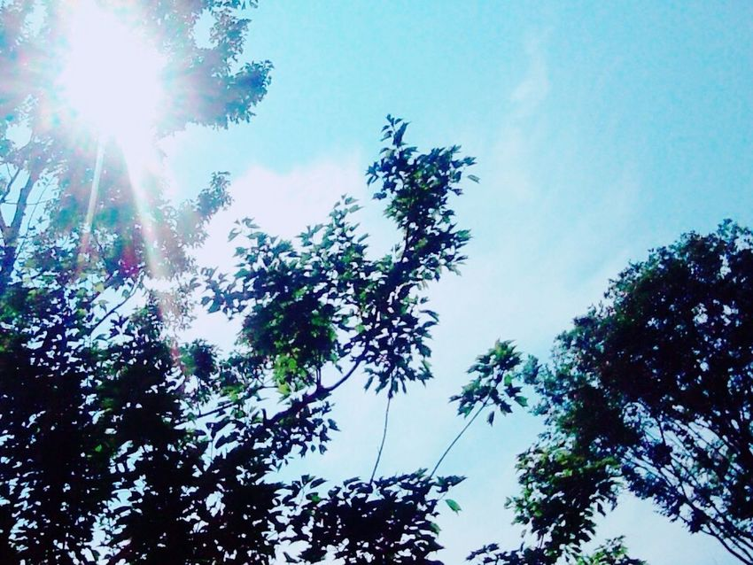 My World Colourfulsky 空 Beautiful Sky Wonderful Sky Nature 夏空 Blue Sunny Sun