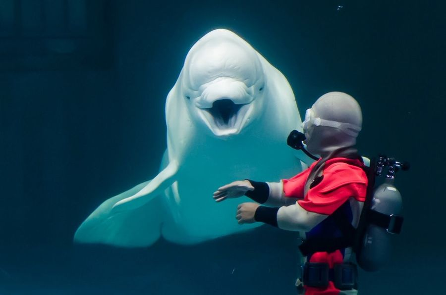 Beluga Real People One Person Representation Underwater Human Representation Indoors  Sea Water Clothing Nature Leisure Activity Lifestyles Unrecognizable Person Full Length Art And Craft Women Toy Men EyeEmNewHere