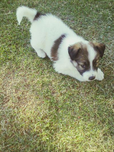 Dog Mi Mascota Perritooo!