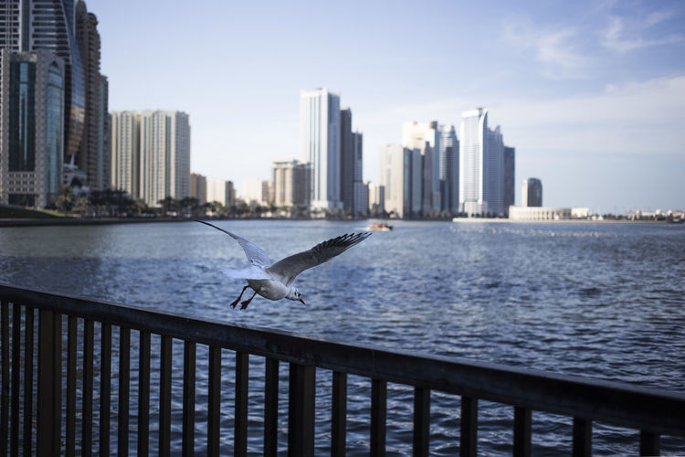 Birds flying over sea by cityscape against sky