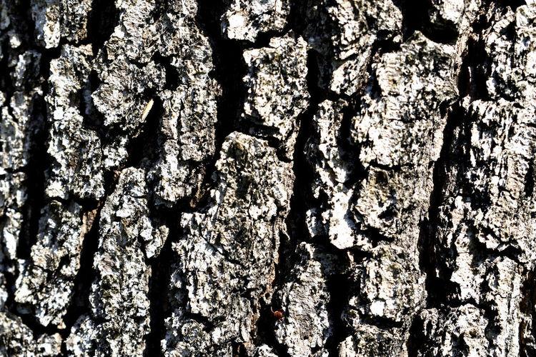 Plant Bark