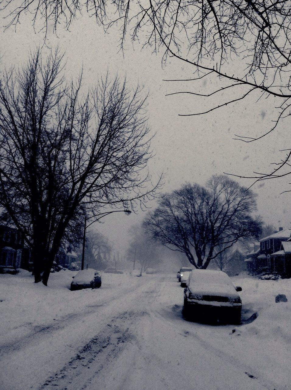 snow, winter, cold temperature, bare tree, weather, tree, car, nature, outdoors, street, transportation, branch, land vehicle, no people, road, beauty in nature, day, landscape, built structure, snowing, architecture, building exterior, city, sky, bleak