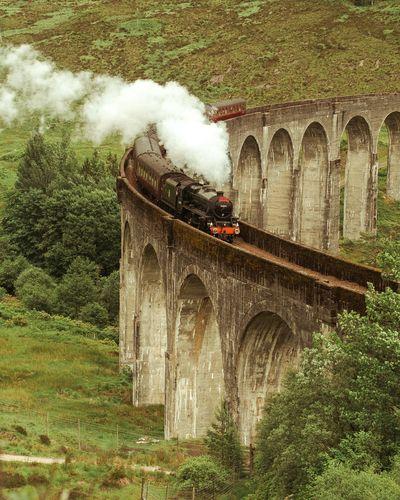 Harry Potter's